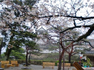 桜の向こうに高知城