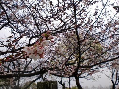 高知城の桜