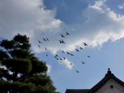 高知城の鳩